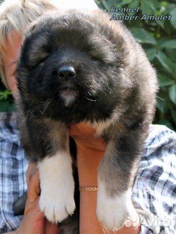 Питомник служебных собак красная звезда
