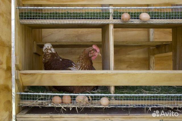 Гнездо для кур своими руками фото