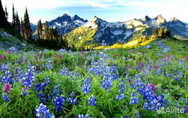 красивые картинки на рабочий стол природа цветы № 512019 бесплатно