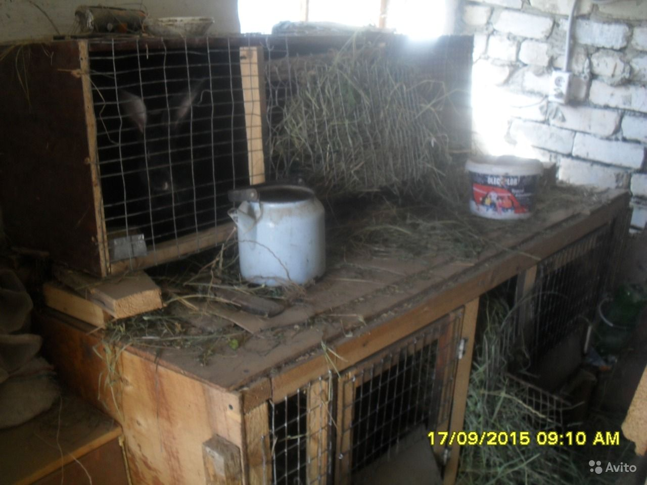 мини фермы кроликов купить: