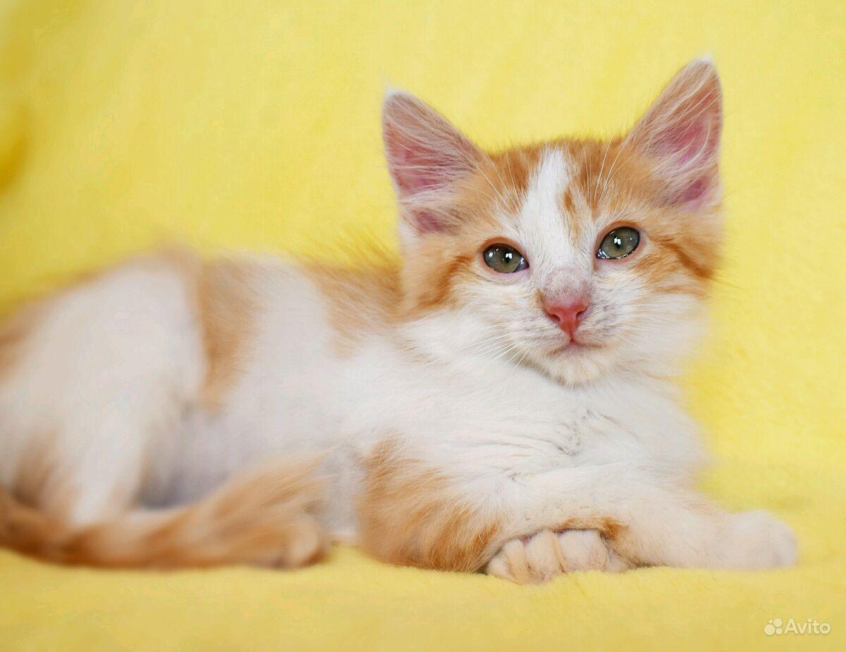 Котенок Персик ищет дом