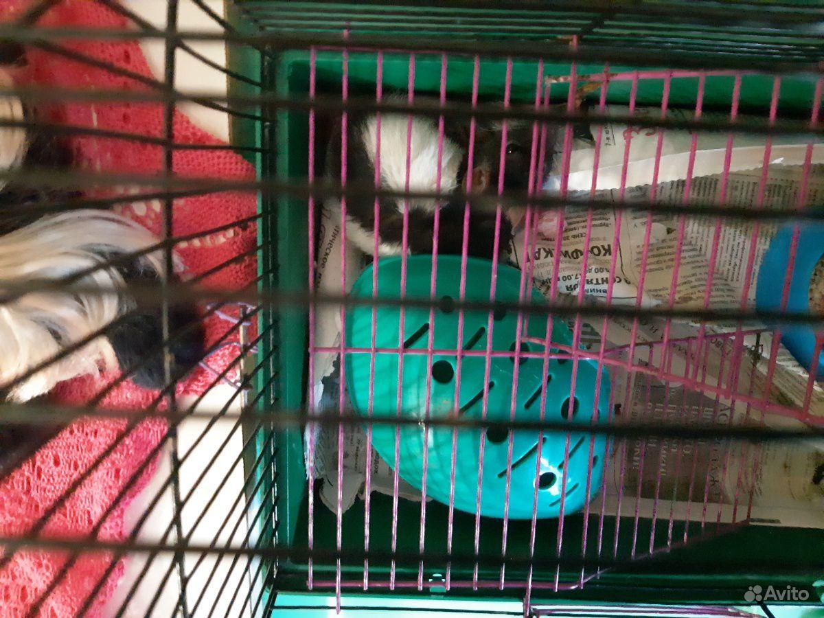 Крыса и черепаха