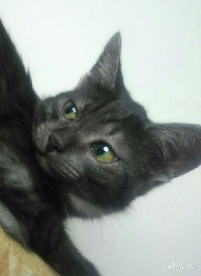 Отдам котят - фотография № 5