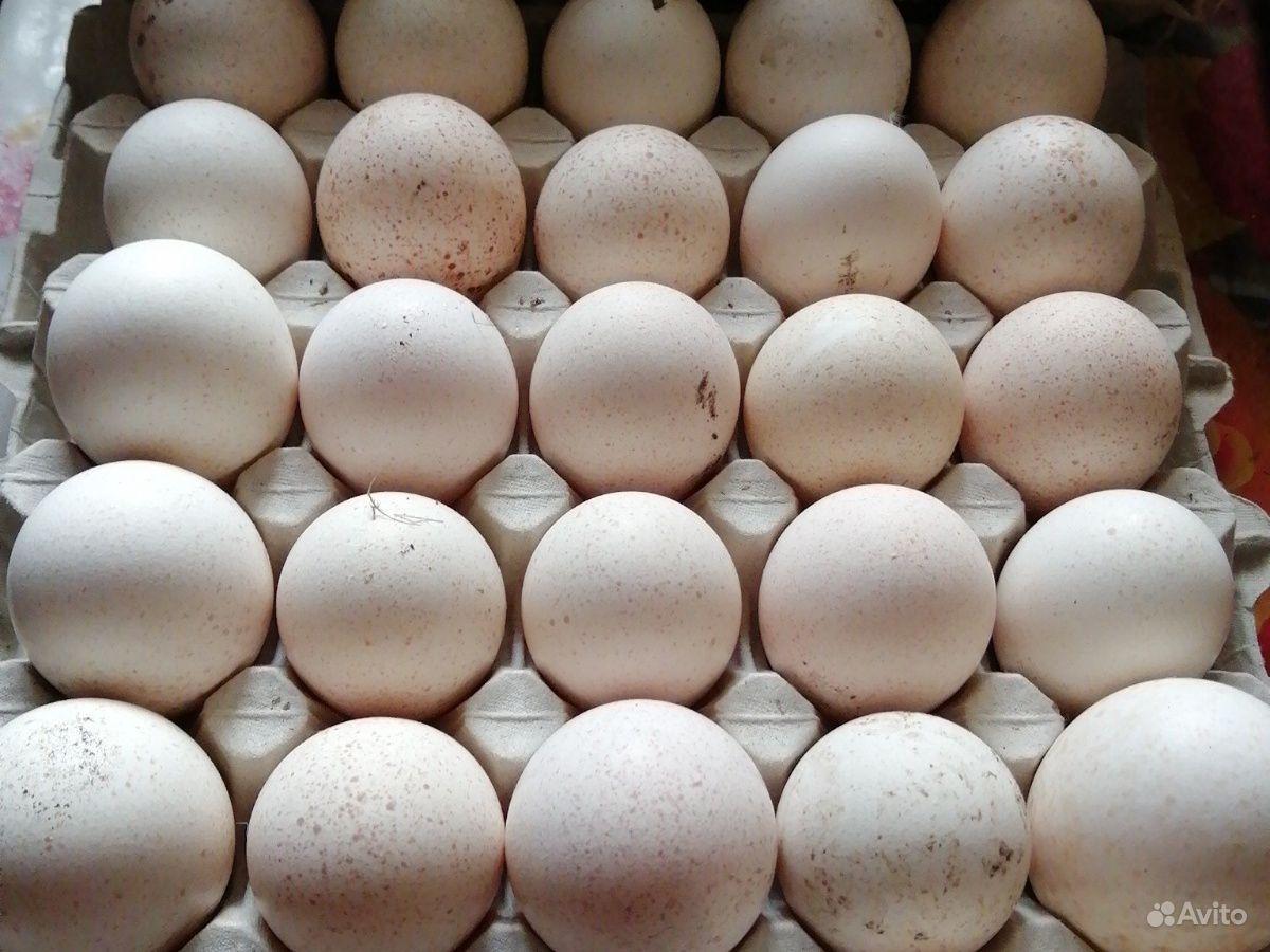 заре христианства инкубация индюшиных яиц фото сделать диадему