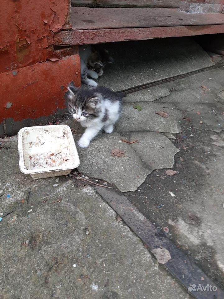 котенок в добрые руки картинки