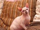 Кошечка Тиана