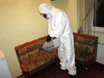 Уничтожение клопов, тараканов, крыс, плесени — Предложение услуг в Москве