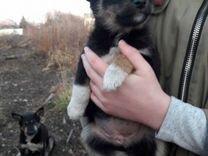 Замерзают щенки Нужен дом — Собаки в Хоре