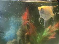 Аквариум вместе с рыбкой