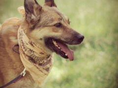 Добрая собака Чили в хорошие руки