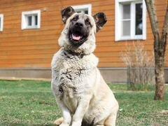 Бусина собака в добрые руки