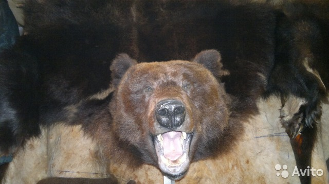Шкура медведя цена на авито