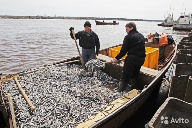 рыбалка в приморском районе санкт-петербурга