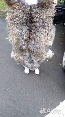 коты в овечьей шкуре фото весенние образы разных