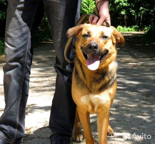 Ирма - добрая собака в добрые ручки купить на Зозу.ру - фотография № 2