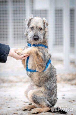 Щенок в дар, небольшая собака в дар, маленький щен купить на Зозу.ру - фотография № 1