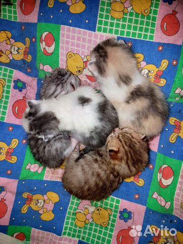 Kittens buy 3