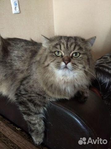 Котята озорнята  89502742399 купить 5
