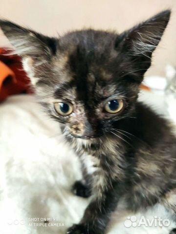 Kitten girl  buy 5
