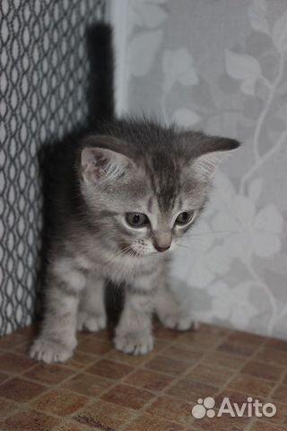 Котята  89050840059 купить 5