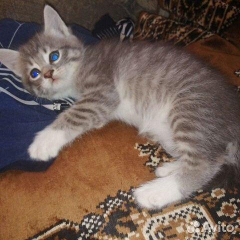 Кошка  89148760418 купить 4