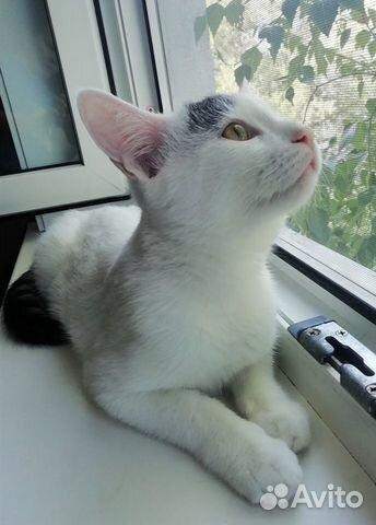 Котенок ищет дом и добрые ручки  89170744017 купить 3