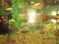 Улитки и рыбки