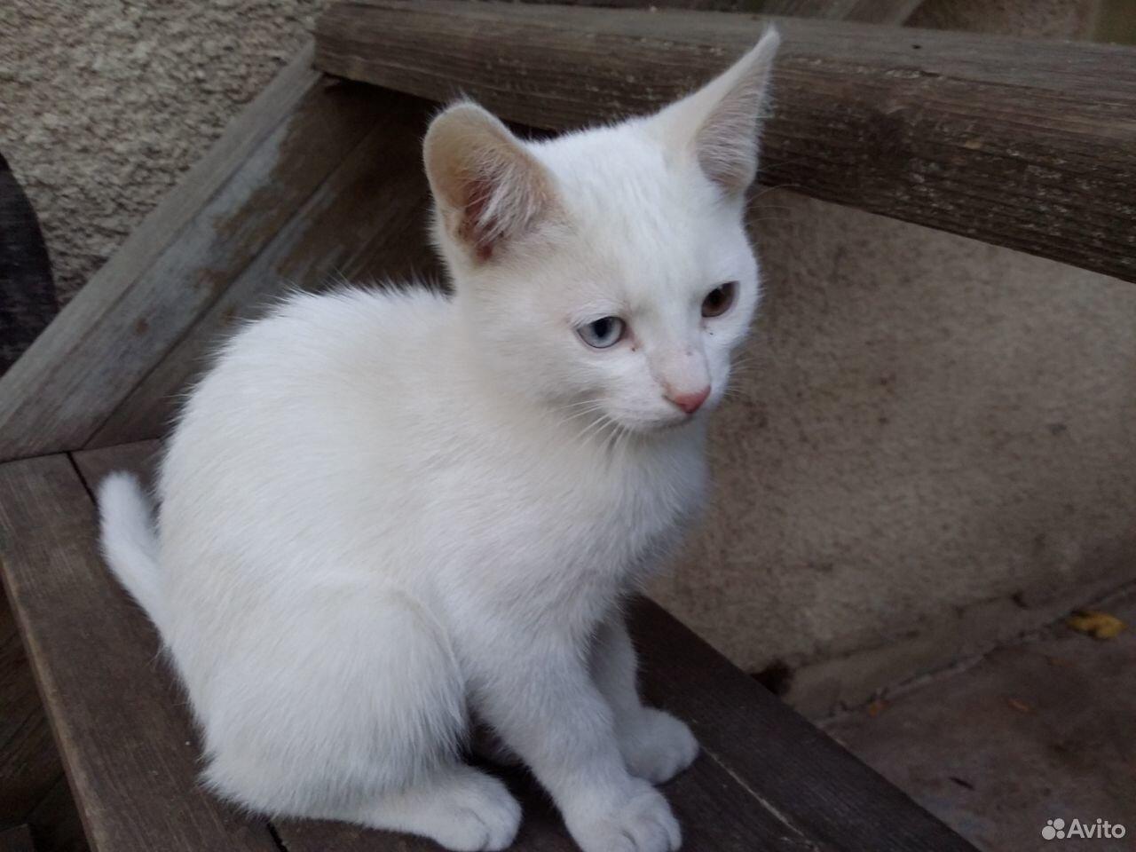 Белый котик с разноцветными глазками