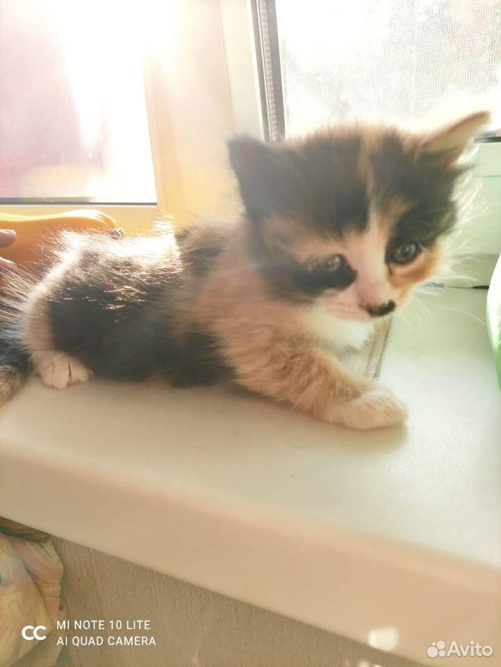 Котята в добрые руки  89011218595 купить 6