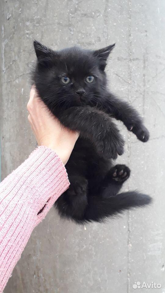 Подкинули котенка 89204459824 купить 3