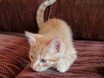 Отдам в хорошие руки рыжих котят, 2 мальчика