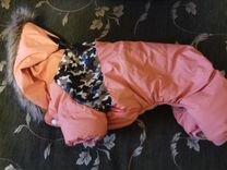 Одежда для малой собачки