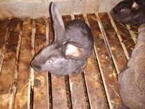 Крольчата 3 месяца