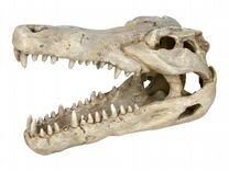 Череп дракона,крокодила,динозавра