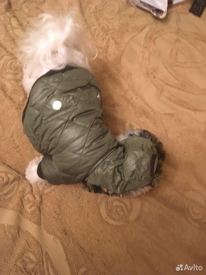 Куртка для собаки petsoo  89191738672 купить 4