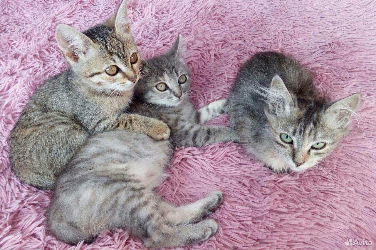 Котята с доставкой  89524383381 купить 1