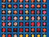 Розы оптом и в розницу со склада круглосуточно